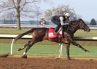 McCraken Stretches Out in Keeneland Work