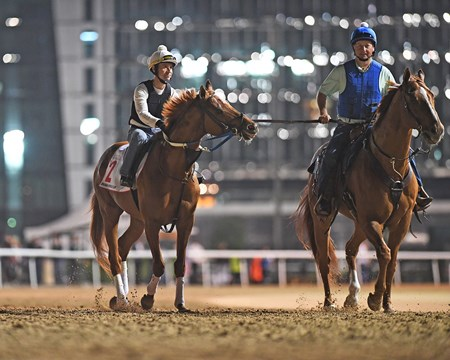 Gun Runner Dubai World Cup -Morning works 3/24/17