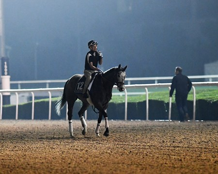 Richard's Boy Dubai World Cup -Morning works 3/24/17