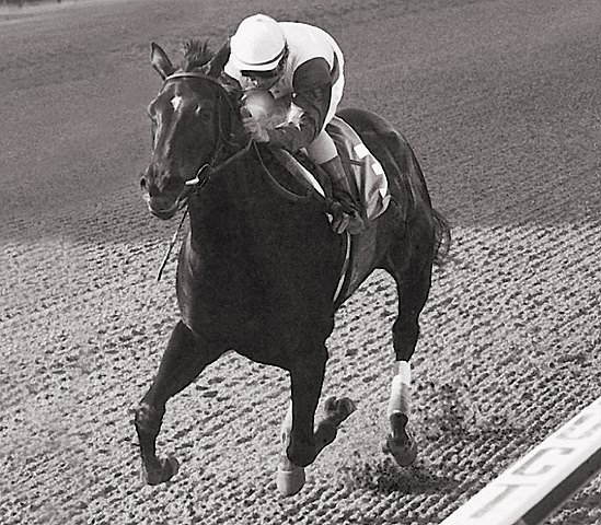 Ruffian; Dark bay/brown filly 1972, Reviewer - Shenanigans by Native Dancer