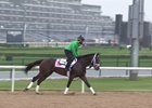 Dubai World Cup: Horses Training, March 21, 2017 Part 2