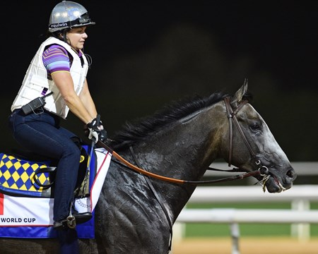 Arrogate - Meydan - March 20, 2017
