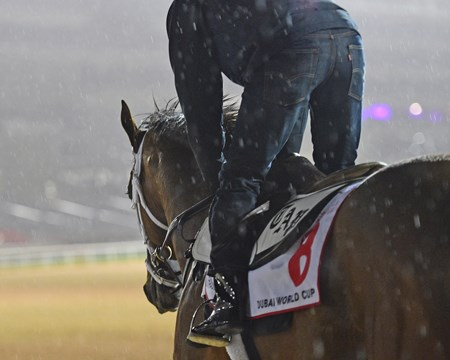Keen Ice Dubai World Cup -Morning works 3/21/17