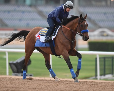 Hoppertunity Dubai World Cup -Morning works 3/24/17