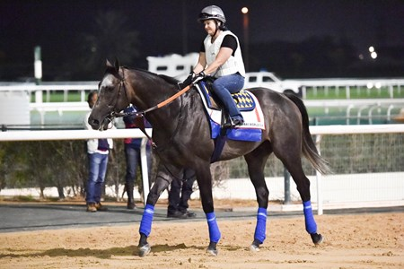 Arrogate - Dubai March 24, 2017