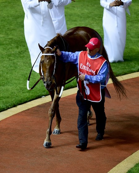 Gun Runner in the paddock prior to the 2017 Dubai World Cup