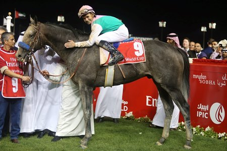 In his previous start, Arrogate faltered early to run last, but made up ground to take the Dubai World Cup