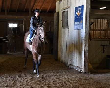 Cheyenne Jones on Monocle during riding test, midterm exams Hands on training for NARA students at the Lexington Thoroughbred Center in Lexington, Ky., on March 9, 2017.  Staff include Remi Bellocq, Dixie Hayes (program coordinator),  Alicia Benben (Academic Coordinator/Instructor), Nicole Carlson (former student, now barn manager).