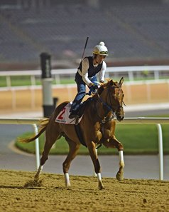 Gun Runner works a timed half-mile in :49 4/5 March 20 at Meydan