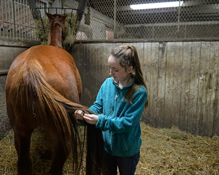 student working on a tail. Hands on training for NARA students at the Lexington Thoroughbred Center in Lexington, Ky., on March 9, 2017.  Staff include Remi Bellocq, Dixie Hayes (program coordinator),  Alicia Benben (Academic Coordinator/Instructor), Nicole Carlson (former student, now barn manager).