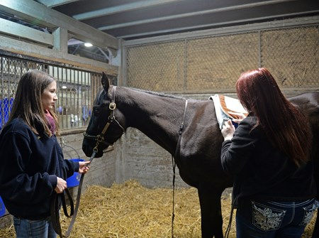 Instructor Alicia Benben, left, with student being timed while saddling a horse. Hands on training for NARA students at the Lexington Thoroughbred Center in Lexington, Ky., on March 9, 2017.  Staff include Remi Bellocq, Dixie Hayes (program coordinator),  Alicia Benben (Academic Coordinator/Instructor), Nicole Carlson (former student, now barn manager).