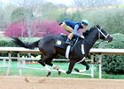Rebel Prospects Turn in Oaklawn Works