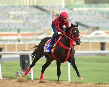 Sharp Azteca - Meydan - March 20, 2017