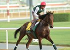 Zarak gallops March 20 at Meydan