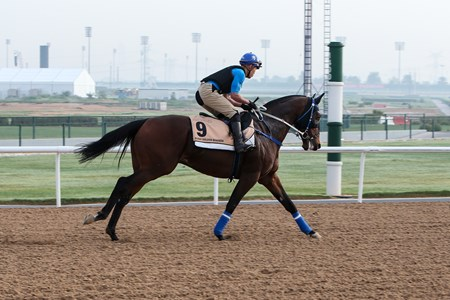 Dundonnell - Meydan - March 23, 2017