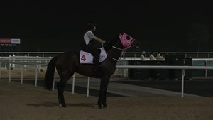 Dubai World Cup: Horses Training, March 22, 2017 Part 2