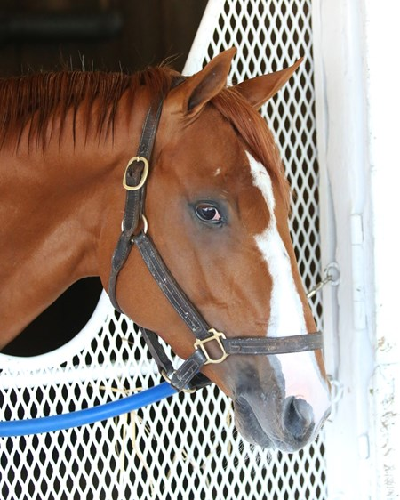 Hence - Churchill Downs - Head Shot - 04-05-17