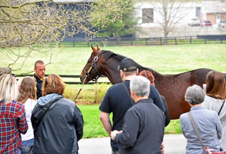 Doug Carr with Claiborne shows Orb to the tourists. Horse Country tours at Claiborne Farm and Runnymede Farm in Paris, Ky., on March 30, 2017