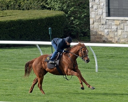 Undrafted working at Keeneland on April 2, 2017.