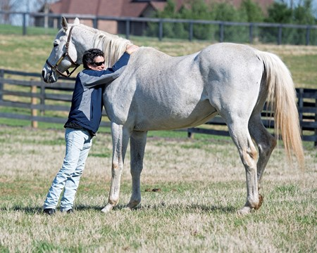 Silver Charm, now 23, at Old Friends near Georgetown, Ky., where he is celebrating the 20th anniversary of his Kentucky Derby (G1) win. Shown with his exercise rider (jockey) Joe Steiner, who rode Silver Charm leading up to the Derby.