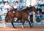 Redoute's Choice Colt Tops Strong Inglis Easter Sale