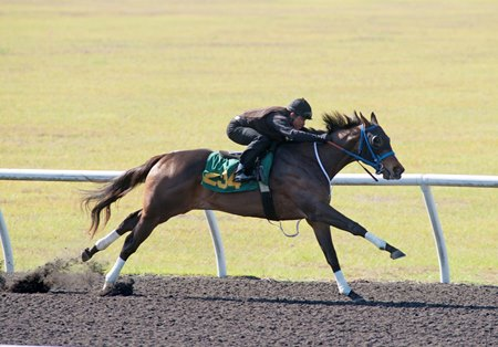 Hip 234, a Florida-bred filly from the first crop of Prospective