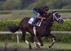 Always Dreaming working April 21 at Palm Meadows Training Center