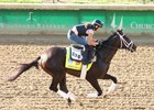 Always Dreaming gallops April 26 at Churchill Downs