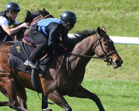 Lady Aurelia working at Keeneland April 9