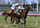 War Correspondent wins the Miami Mile Stakes