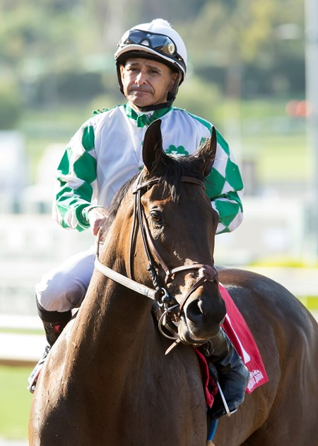 Jockey Mike Smith guides Sircat Sally to the winner's circle after their victory in the Grade III, $150,000 Providencia Stakes, Saturday, April 8, 2017 at Santa Anita Park, Arcadia CA.