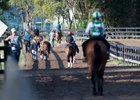 Horses walk to and from the track at the OBS facility in Ocala