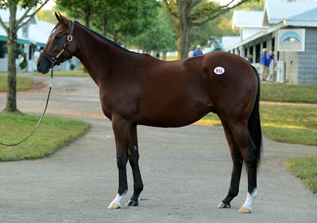 Hip 612, consigned by Taylor Made sales to the 2015 Keeneland September yearling sale, named Irap $140,000 RNA
