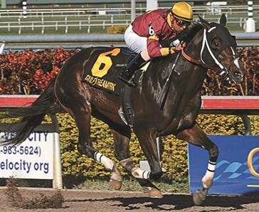 Big Drama Horse Profile Bloodhorse