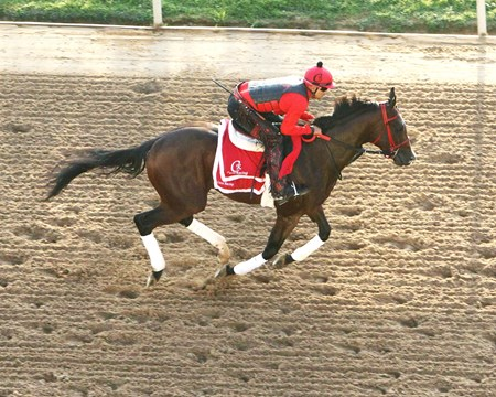 Classic Empire - Oaklawn Park - April 13, 2017