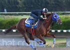 Gunnevera Takes Five-Furlong Work in Stride