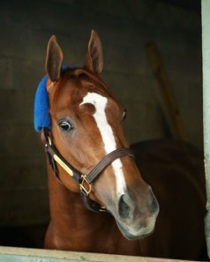 Stellar Wind arrived at Oaklawn Park April 11 for her run in the Apple Blossom Handicap
