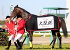 Last year's Tenno Sho Spring winner, Kitasan Black after winning the grade 1 Osaka Hai