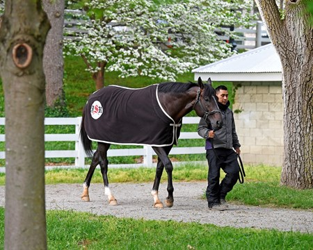Girvin at Keeneland.  April 24, 2017 Keeneland in Lexington, Ky.