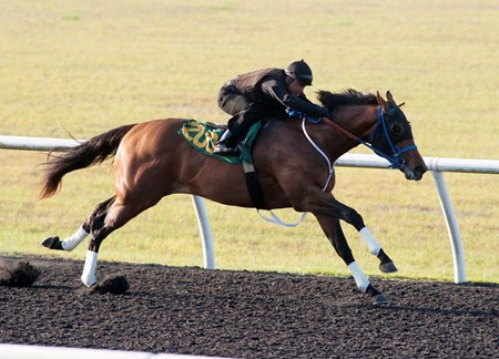 Hip 200, a Wildcat Heir colt, recorded the fastest quarter-mile time April 17