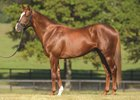 Hill 'n' Dale Farms-based stallion Power Broker