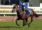 Winx Wins As She Pleases at Royal Randwick