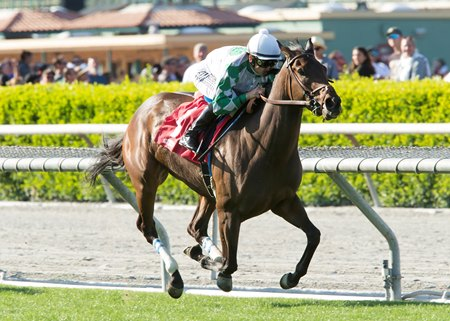 Sircat Sally wins the Providencia Stakes