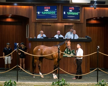 OBS 2017 Spring Sale of Two-Year-Olds in Training