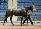 Provocative, in foal to Tavistock, brought AU$1.2 million (US$906,132)