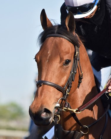Lady Eli Brings Her Class To Gamely Bloodhorse