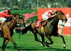 Fire the Groom wins the 1991 Wilshire Handicap at Hollywood Park