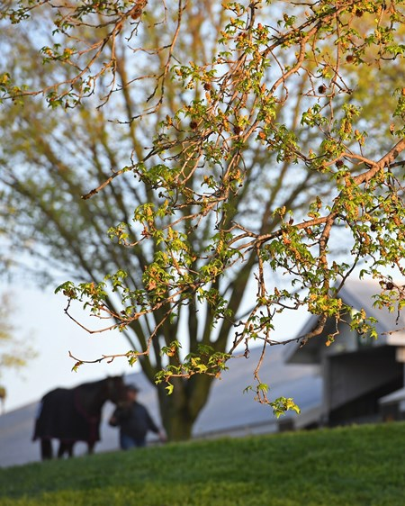 Scenes for immigration story photographed at Keeneland. April 12, 2017 Keeneland in Lexington, Ky.