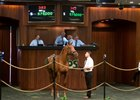 Distorted Humor Filly Brings $575,000 at OBS