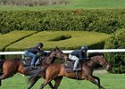 Lady Aurelia (in front) works five furlongs with Bound for Nowhere over Keeneland's firm turf in 1:00 1/5